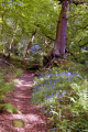 dimmingsdale staffordshire moorlands moorland countryside rural environmental uk springtime trees bluebells churnet valley churnett river embankment staffs england english great britain united kingdom british