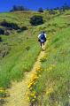 walking mt diabolo near san francisco california american yankee travel hiking rambling springtime concorde oakland hayward fault franciscan californian usa united states america kingdom british