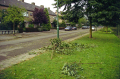 storm damage near utrecht holland. dutch netherlands european travel weather meteorology tree branches twigs leaves boughs wind hurricane thunder lightning holland la hollande holanda olanda europe