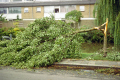 trees damaged strom. utrecht holland. dutch netherlands european travel meteorology tree branches twigs leaves boughs weather wind hurricane thunder lightning holland la hollande holanda olanda europe