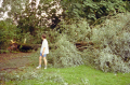 tree destroyed storm near utrecht holland. dutch netherlands european travel meteorology branches twigs leaves boughs weather wind hurricane thunder lightning holland la hollande holanda olanda europe