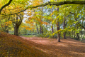 mousehold heath norwich showing autumn colour seasons seasonal environmental uk park walk leisure norfolk england english great britain united kingdom british
