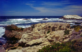 monterey california. bird rock pebble beach california american yankee travel carmel ice plant cormorant seals 17 mile drive golf course pacific californian usa united states america