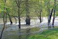 river lot france overflowing banks. french landscapes european travel meadow floodplain trees inundated flooding midi-pyrenees midi pyrenees midipyrenees aveyron la francia frankreich europe