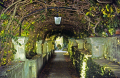 covered path villa capri. southern italy italian european travel garden shady shaded wisteria italia costiera amalfitana sorrento napoli naples walled ornamental capri italien italie europe