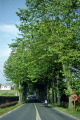 typically french avenue trees... aquitaine near biarritz landscapes european travel shaded shady napoleon bonaparte army marching pays-basque pays basque paysbasque pyrenees-atlantiques pyrenees atlantiques pyreneesatlantiques pyrènèes france la francia frankreich europe