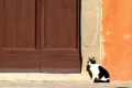 black white cat door way pisa italy cats felidae animals animalia natural history nature misc. doorway animal italien italia italie europe european italian