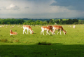deer tatton park animals animalia natural history nature misc. cheshire england english great britain united kingdom british