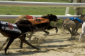 greyhounds racing romford statdium sports sporting uk dog track race speed fast essex england english great britain united kingdom british