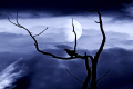 bird branch moonlight sky natural history nature misc. leeds yorkshire england english great britain united kingdom british