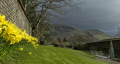 country garden sharrow bay ullswater lake district england. gardens gardening horticulture tourist attractions england english uk daffodills moody sky mountains spring cumbria cumbrian great britain united kingdom british