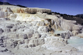 minerva terrace mammoth hot springs yellowstone wyoming usa. geology geological science misc. thermophilic bacteria algae travertine calcite calcium carbonate usa united states america american