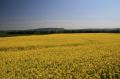 balado summer.scotland summer scotland summerscotland countryside rural environmental uk rapeseed fields perth kinross perthshire scotland scottish scotch scots escocia schottland great britain united kingdom british
