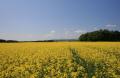 balado summer.scotland summer scotland summerscotland countryside rural environmental uk rapeseed field perth kinross perthshire scotland scottish scotch scots escocia schottland great britain united kingdom british