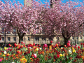 springtime dunn square paisley.scotland paisley scotland paisleyscotland uk parks gardens environmental paisley renfrewshire scotland scottish scotch scots escocia schottland great britain united kingdom british