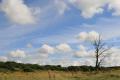 summer sky trees wooden natural history nature misc. tree east kilbride lanarkshire scotland scottish scotch scots escocia schottland great britain united kingdom british