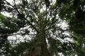 looking tree. trees wooden natural history nature misc. argyll bute argyllshire scotland scottish scotch scots escocia schottland great britain united kingdom british