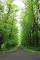 tree lined road trees wooden natural history nature misc. argyll bute argyllshire scotland scottish scotch scots escocia schottland great britain united kingdom british