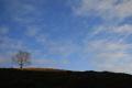 tree hill trees wooden natural history nature misc. sky perth kinross perthshire scotland scottish scotch scots escocia schottland great britain united kingdom british