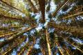 trees reaching sky wooden natural history nature misc. tree forest perth kinross perthshire scotland scottish scotch scots escocia schottland great britain united kingdom british