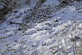 interesting textures snow covered rocky hillside col guéry france natural history nature misc. geology mountains landslide slip winter snowball avalanch snowy auvergne la francia frankreich europe european french