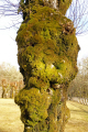 gnarled moss covered tree grounds château sédières limousin france trees wooden natural history nature misc. eyrein gare castle mansion corrèze correze sedieres chateau la francia frankreich europe european french