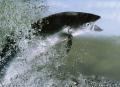 atlantic salmon salmo salar food nourishment nutrients abstracts misc. fjord norway kongeriket norge europe european norwegan