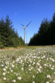 whitelee wind farm near glasgow. energy electrical science misc. alternative glasgow central scotland scottish scotch scots escocia schottland great britain united kingdom british