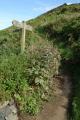 coastal path uk coastline environmental walking lizard cornwall cornish england english angleterre inghilterra inglaterra united kingdom british