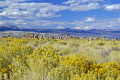 looking sagebrush mono lake basin south tufa field. rock formations geology geological science misc. california calcium carbonate lee vining sierra nevadas saline alkali flies californian usa united states america american
