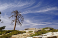 yosemite national park dead tree edge taft point wilderness natural history nature misc. california sierra nevadas mountains alpine np panorama overlook view californian usa united states america american