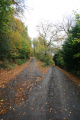 road winter. trees wooden natural history nature misc. autumn countryside argyll bute argyllshire scotland scottish scotch scots escocia schottland great britain united kingdom british uk grande-bretagne grande bretagne grandebretagne großbritannien gran bretagna bretaña states american