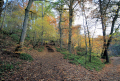 autumn trees wooden natural history nature misc. countryside winter lanarkshire scotland scottish scotch scots escocia schottland great britain united kingdom british uk grande-bretagne grande bretagne grandebretagne großbritannien gran bretagna bretaña