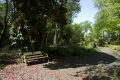 bench path park rhodedendron plant leisure flowers ground seat sitting parkland portmeirion gwynedd wales welsh país gales united kingdom british