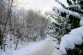 winter trail seasons seasonal environmental snow glasgow central scotland scottish scotch scots escocia schottland united kingdom british