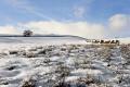 winter landscape strines sheffield south yorkshire countryside rural environmental snow scene trees fields england english angleterre inghilterra inglaterra united kingdom british