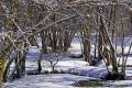 tree lined stream meandering snow. taken southern limousin france french landscapes european corrèze correze snow forest frozen monedieres monédières winter la francia frankreich