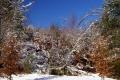 winter colours... french landscapes european corrèze correze snow forest france frozen monedieres monédières suc-au-may suc au may sucaumay limousin la francia frankreich