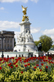 queens residence buckingham palace victoria memorial spring time tulips foreground. london royalty queen tourism famous sights capital england english cities sight-seeing sight seeing sightseeing building statue architecture cockney angleterre inghilterra inglaterra united kingdom british