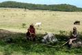 farmers taking break holguin cuba working farm farming animals bull cow relaxing caribbean cuban