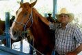 cuban cowboy horse holguin cuba horses equus equine animals animalia natural history nature farm farming riding caribbean