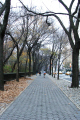 central park new york city american yankee walk way path traffic yellow taxi cab trees fallen leaves big apple united states