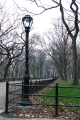 central park new york city american yankee walk way path trees fallen leaves lamp post fence grass green big apple united states