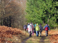 group walkers monedieres region southern limousin. friends friendship buddies pals groups forest monédières winter valley hikers hiking ramblers rambling walking promenade randonnee rain squall rainbow correze limousin france la francia frankreich french