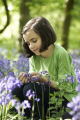 young cute girl sitting wood bluebells touching petals spring time forest chilterns buckinghamshire girls female children kids juveniles infants females feminine womanlike womanly womanish effeminate ladylike flowers nature touch smile high wycombe bucks england english angleterre inghilterra inglaterra united kingdom british