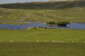 lake near fair head rural britain countryside rustic pastoral environmental farmland cattle trees causeway coast county antrim aontroim northern ireland ulster irish irland irlanda united kingdom british