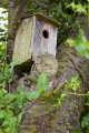 nesting box birds aves animals animalia natural history nature bird tree garden wildlifr wooden cherry sheffield yorkshire england english angleterre inghilterra inglaterra united kingdom british