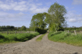 farm lane trees county antrim agriculture farming natural history nature rural green unmade road aontroim northern ireland ulster irish irland irlanda united kingdom british