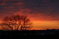 silhouetted tree left frame houses deep blue orange sky. milngavie scotland sunsets dusk sundown glasgow central scottish scotch scots escocia schottland united kingdom british