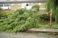 tree damaged storm. utrecht holland. trees wooden natural history nature branches twigs leaves boughs hurricane thunder lightning wind weather meteorology holland la hollande holanda olanda netherlands dutch
